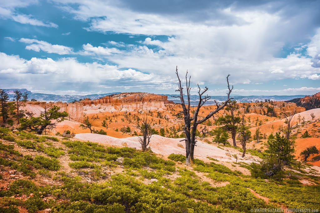 Bryce Canyon National Park – Southwest Trip: Day 3 5