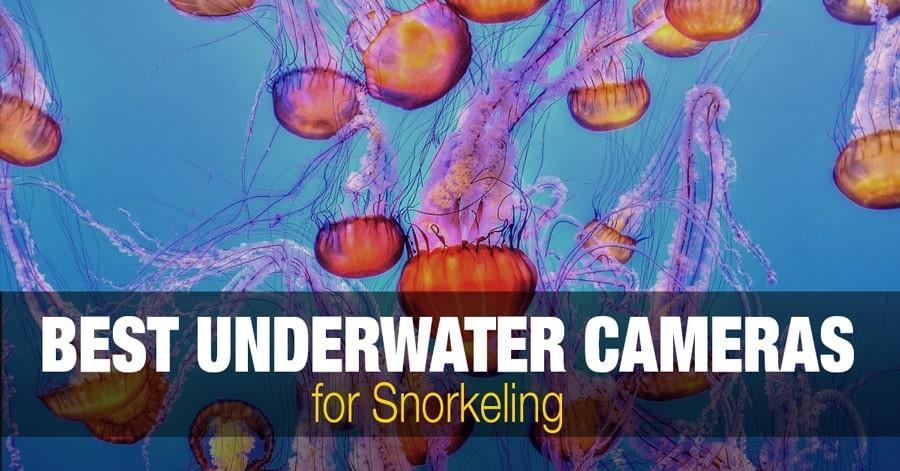 Best Underwater Waterproof Cameras for Snorkeling & Scuba Diving