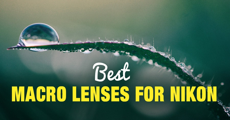 Best Macro Lenses for Nikon