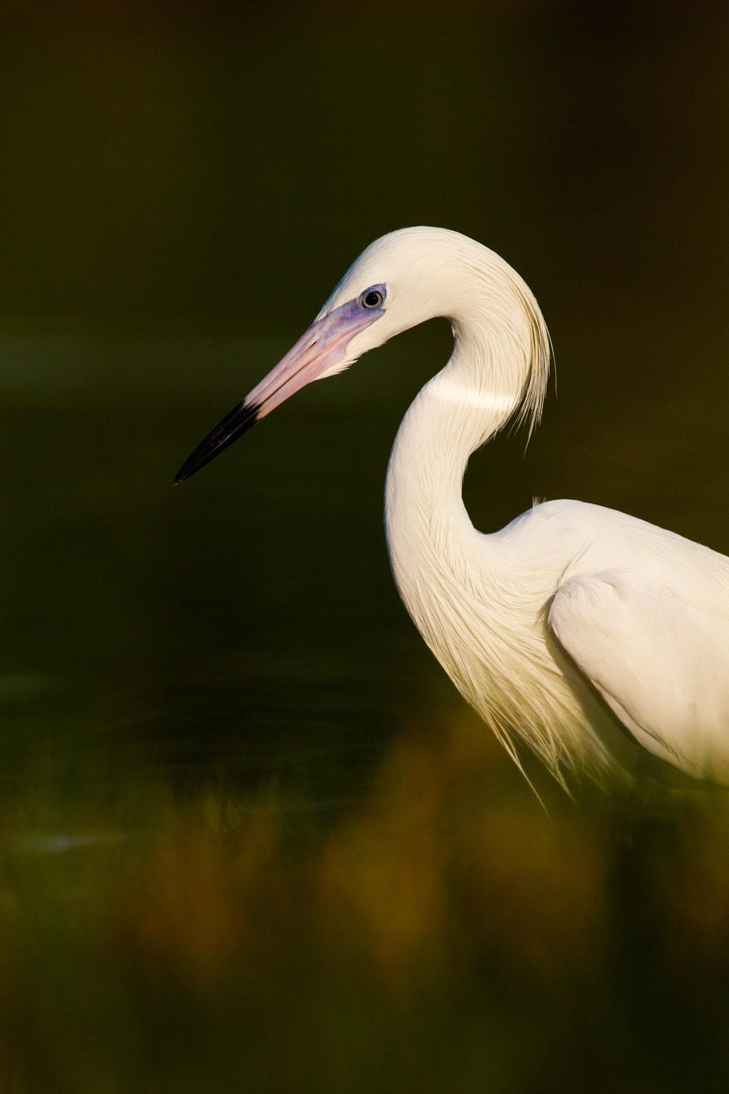 wildlife photo taken with telephoto prime lens