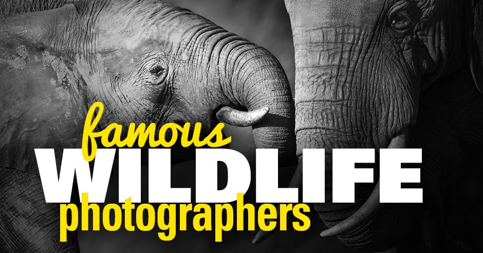 Famous Wildlife Photographers Working Today