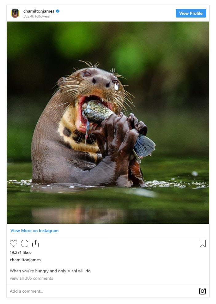 Famous Wildlife and Nature Photographers 1