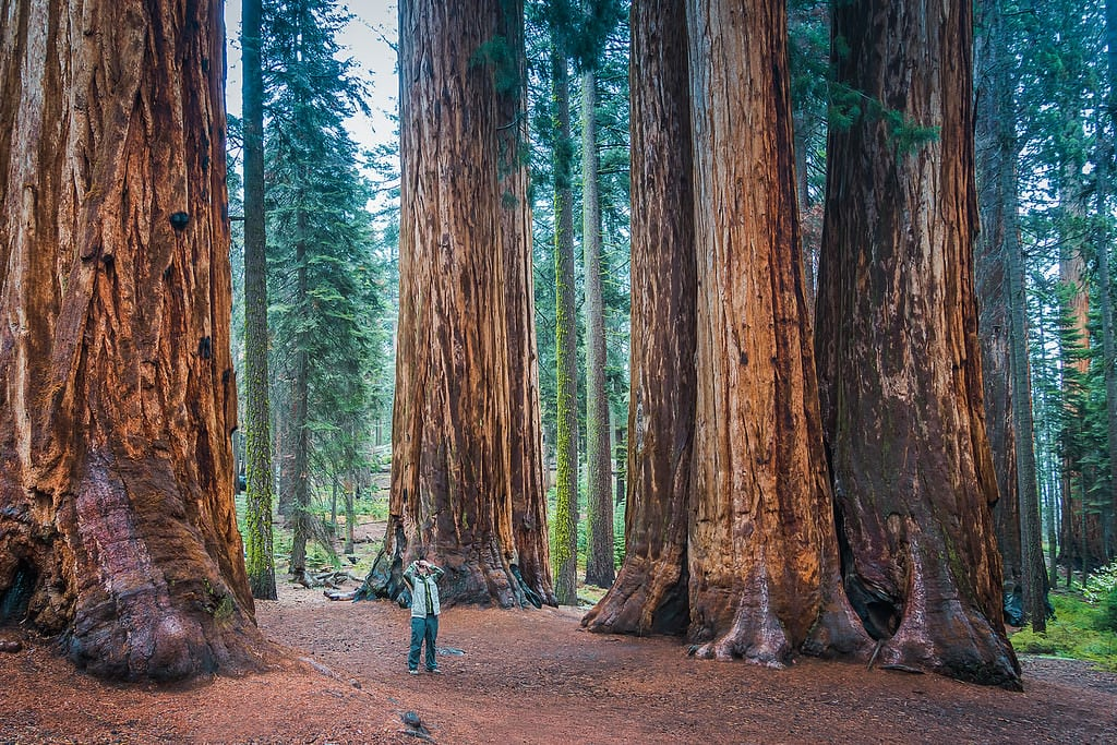 Sequoia National Park - Southwest Trip: Day 8,9 9
