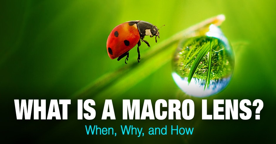 What Is a Macro Lens? When, Why, and How