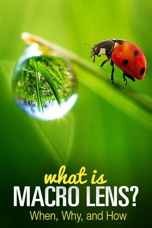 What Is a Macro Lens? When, Why, and How 5