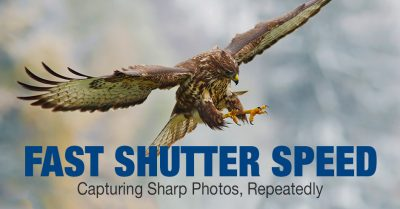 How to Select the Best Camera for Wildlife Photography 4