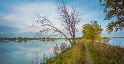 Narrow Path Along the River (Montreal)