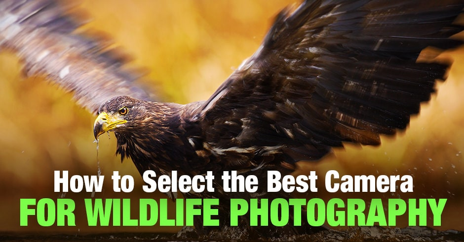 Best Camera for Wildlife Photography: 7 Top Picks