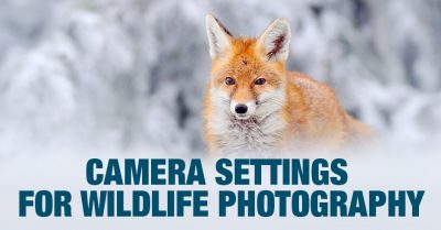 Settings For Wildlife Photography