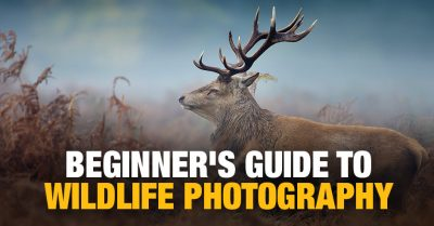 Introduction to Wildlife Photography