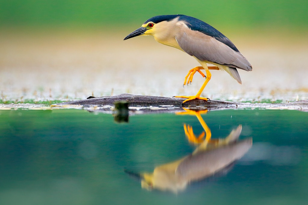 Best Lens for Bird Photography: Budget Options for Beginners and Enthusiasts 4