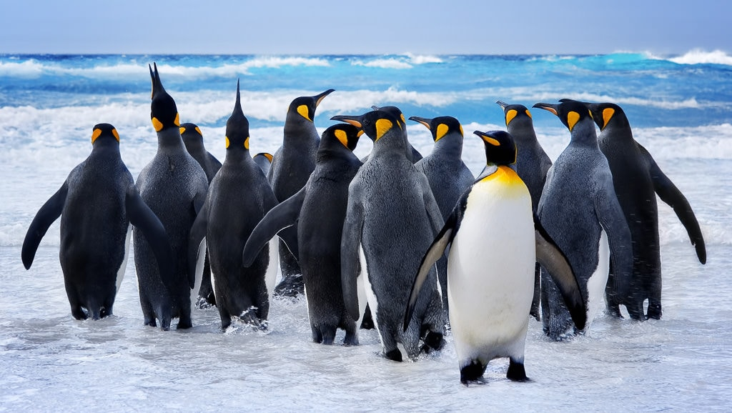 Wildlife photography - penguins on the beach