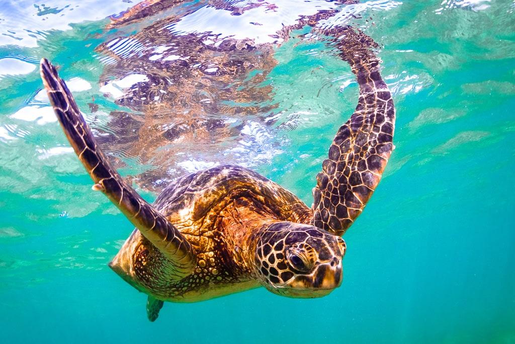 Underwater Photography - Sea Turtle