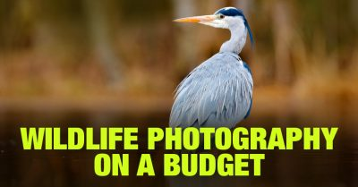 Wildlife Photography on a Budget