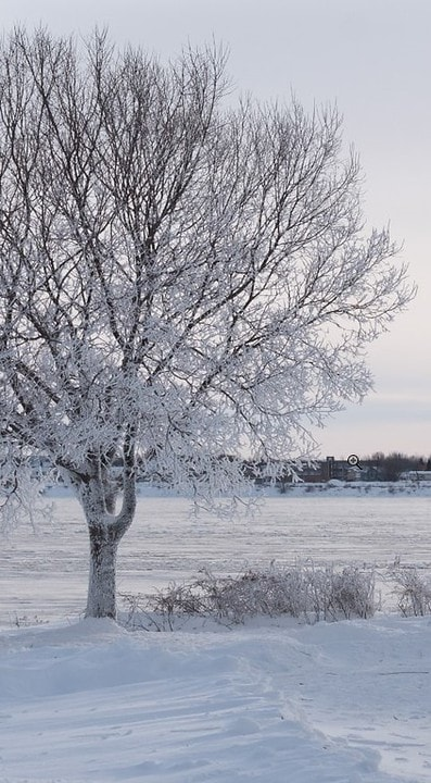 Snow Photography Tips: How to Photograph and Edit Snowy Scenes 3