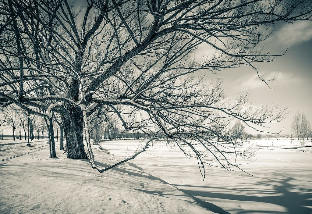 Snow Photography Tips: How to Photograph and Edit Snowy Scenes 13