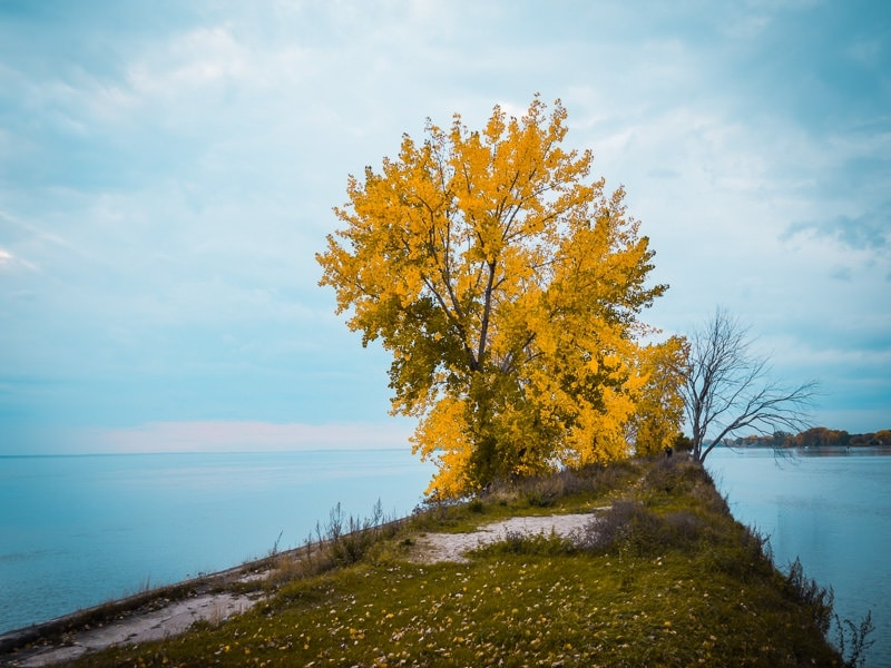 Store: FALL Colors Preset Collection 7