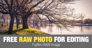 Free RAW Photo: Spring Tree