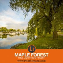 Maple Forest: Free Landscape Lightroom Preset