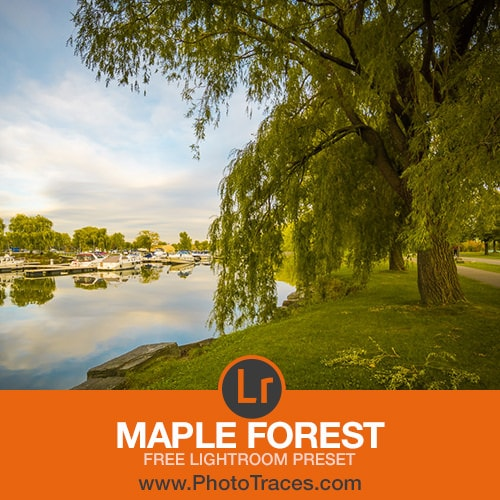 Maple Forest: Free Landscape Lightroom Preset 1